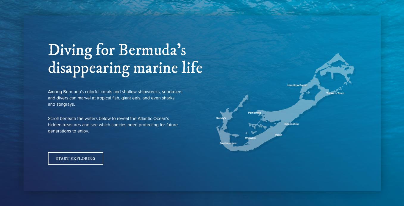 Diving for Bermuda. Image credit: Hamilton Princess Hotel