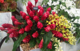 Barbados Horticultural Society display at the Chelsea Flower Show. Image credit: Alwyn Ladell