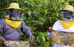 Beekeeping in Guyana. Image via Caribbean Development Bank