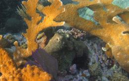 Coral reef, St. Thomas, USVI