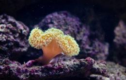 Coral close-up. Image credit: Mathias Appel
