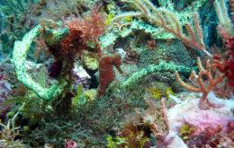Coral reef, Grenada. Image credit: Karli Drinkwater