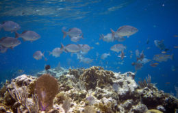 Reef and fish. Image: Jeff Mitton