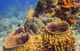 Sponges. Image: Chris Nelson
