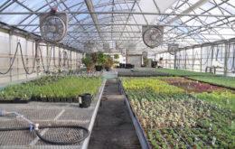 Greenhouse. Image: J Biochemist