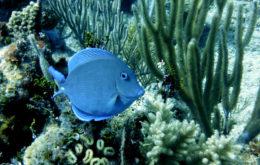 Coral reef, Cuba. Image: rparsons86