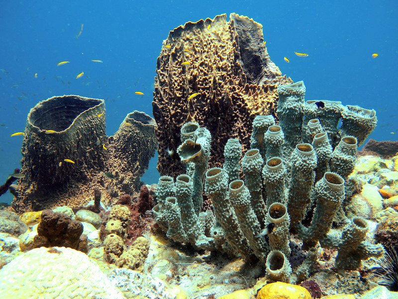 Coral reef, Dominica. Image: Thomas Jundt