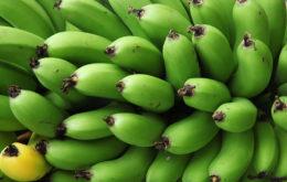 Bananas. Image: CEB