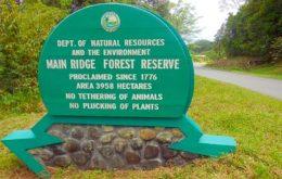 Main Ridge Forest Reserve, Tobago. Image via looptt.com