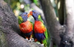 Guadeloupe birds. Image: Nicolas Loison