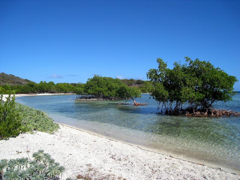 Mangroves, British Virgin Islands. Image: Alan Wolf