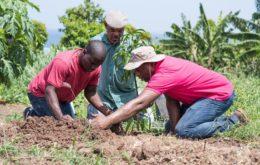 Prime Minister Roosevelt Skerrit plants trees in Dominica. Image: via Roosevelt Skerrit Facebook page.