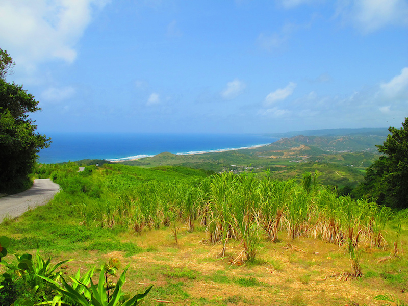 Landscape, Barbados. Image: OakleyOriginals