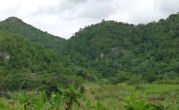 Cockpit Country, Jamaica. Image: Marcel Holyoak.
