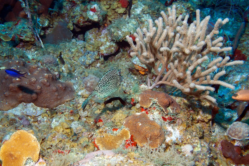 Coral reef, St. Kitts and Nevis. Image: Björn Stude