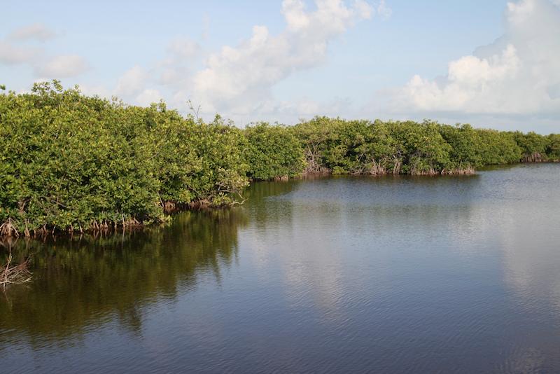 Belize mangroves. Image: Bernt Rostad.
