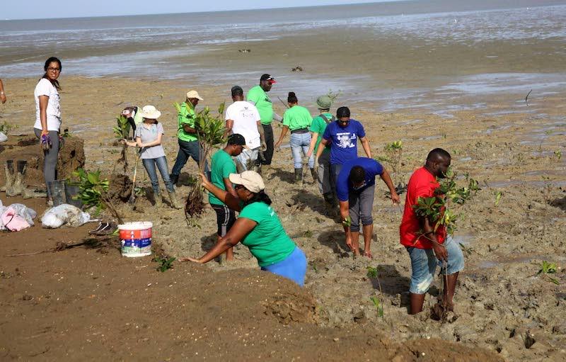 Planting mangroves in Trinidad. Image: Vashti Singh via Trinidad and Tobago Newsday