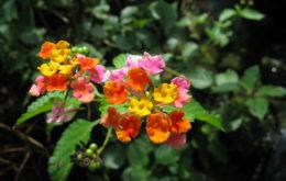 Suriname flowers. Image: Joost Beljon