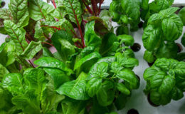 Aquaponics. Image: Plant Chicago.