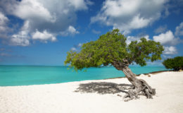Eagle Beach, Aruba. Image: Chris Ford