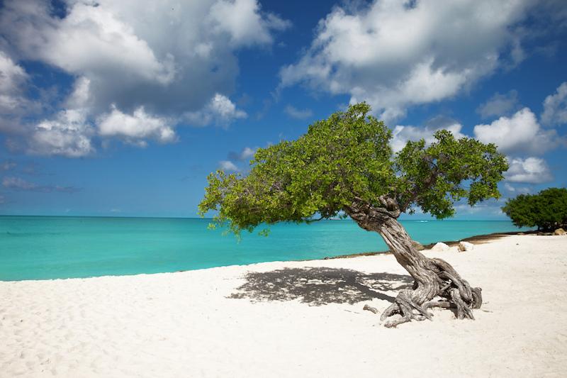 Eagle Beach, Aruba. Image: Chris Ford