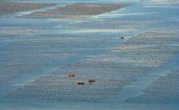 Mariculture. Image: Michael Chu.