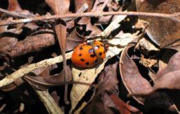Shield bug, Puerto Rico. Image: S Crews