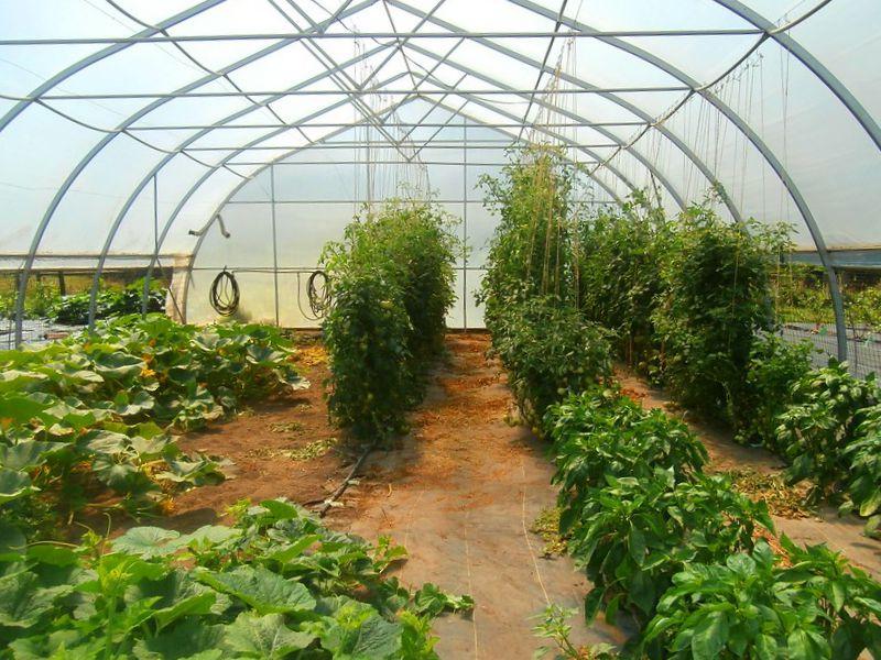 Greenhouse. Image: Jennifer C.